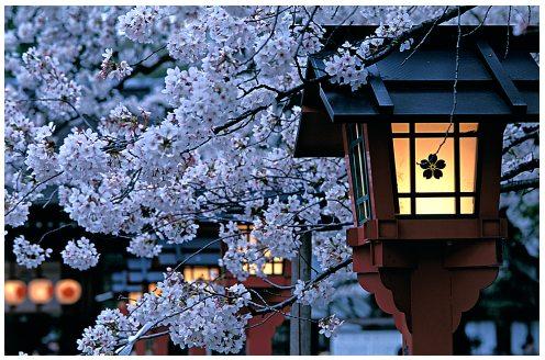 http://www.mynewsletterbuilder.com/ex/template_content_corner/ex137/images/japan.jpg
