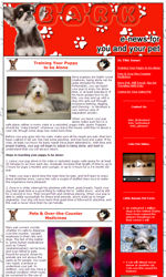 Pet Care Email Newsletter Template for Email Marketing